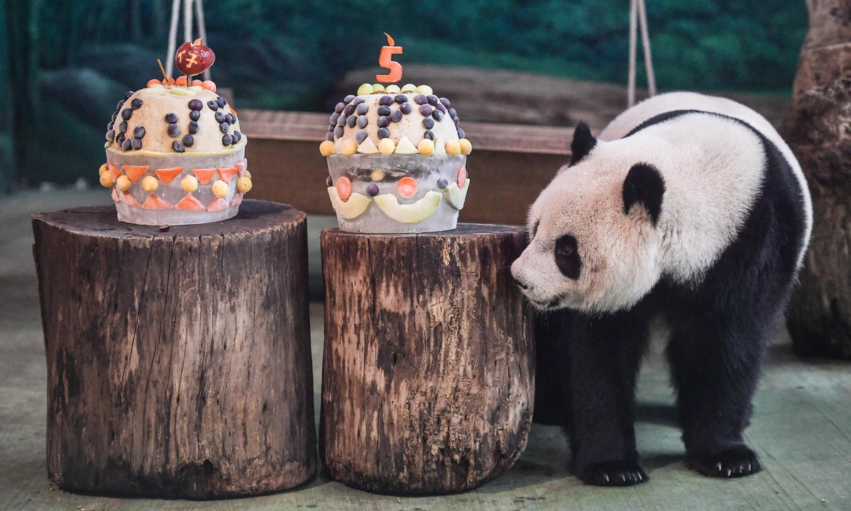 Taiwan Celebrates Giant Panda's Birthday